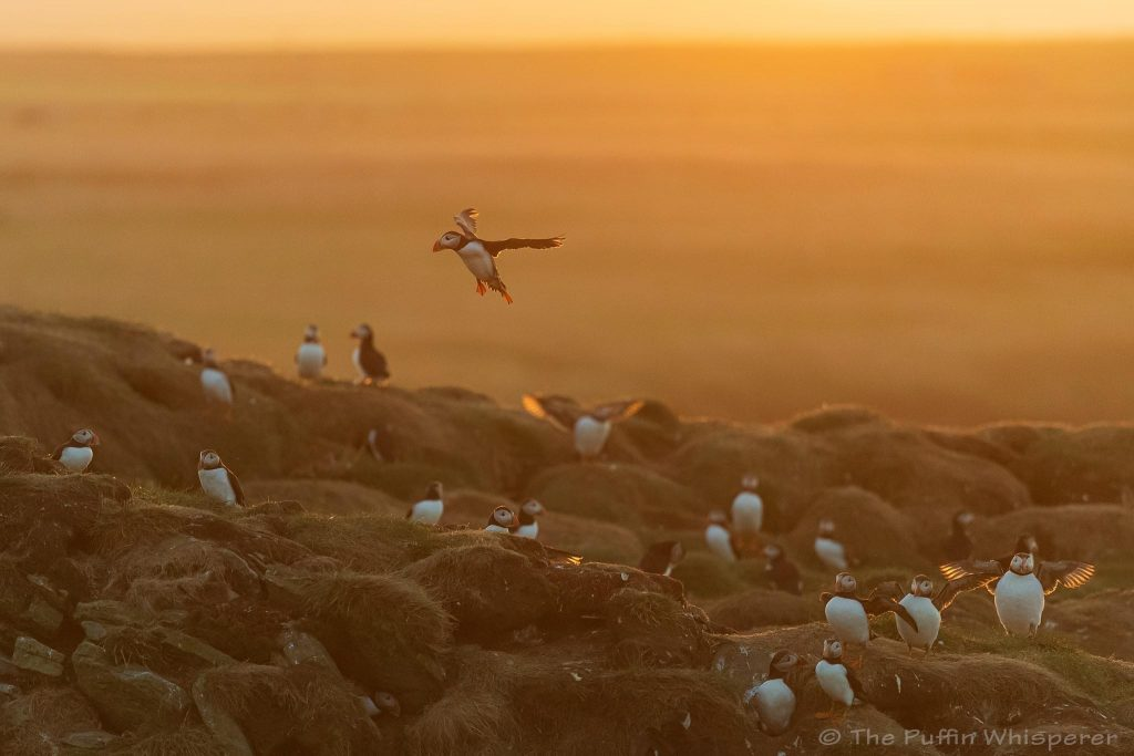 Sunset-at-Castle-o'Burrian © Antonella Papa