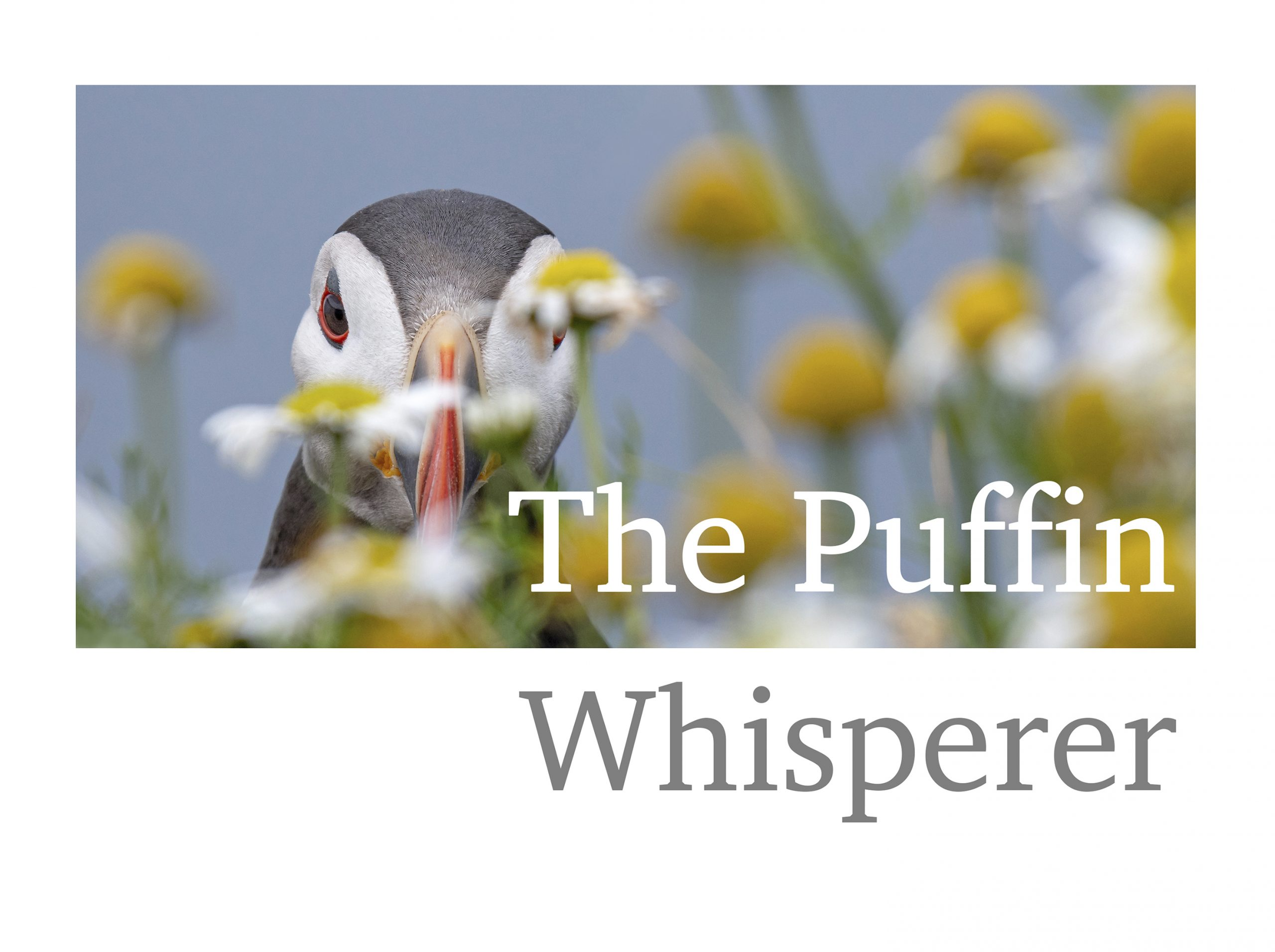 The Puffin Whisperer
